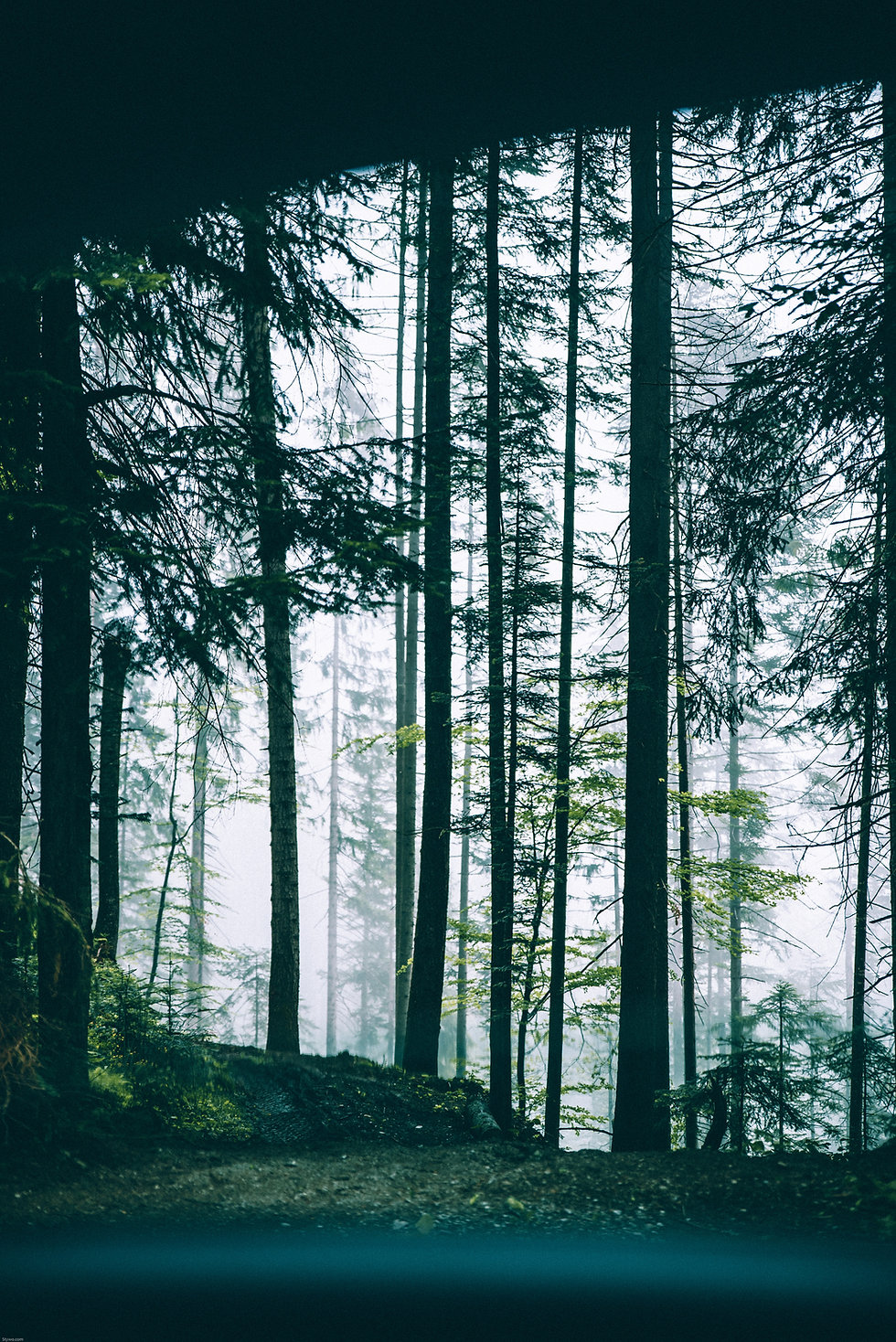 Trees-Day.jpg