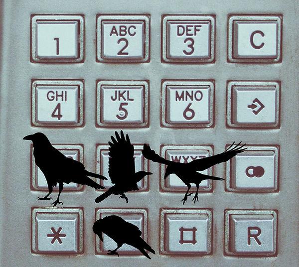 phone-crow.jpg