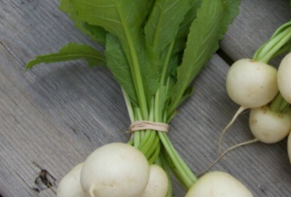 Salad Turnips - 1 bunch