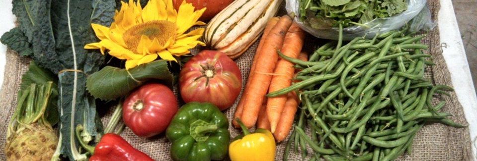 Yearly Full Vegetable CSA Share