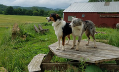 together on picnic table.jpg