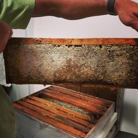Frame full of capped honey
