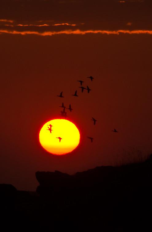 Midnightsun birds.jpg