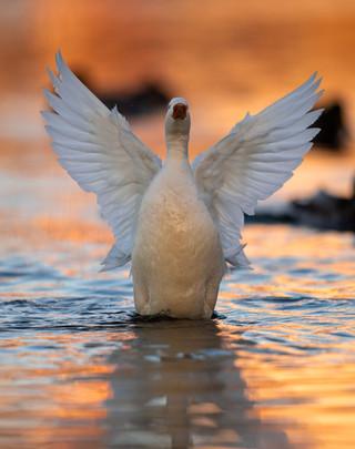 Wings like an angel.jpg