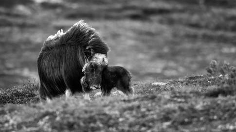 Motherly affection.jpg