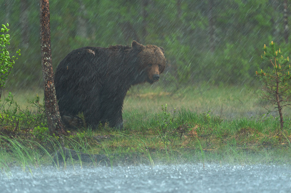 Intese rain.jpg
