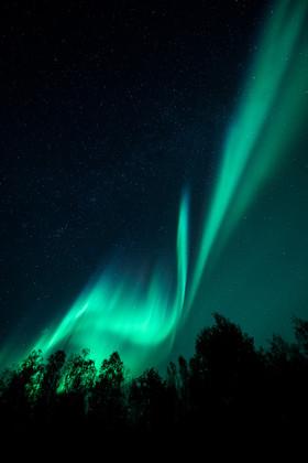 Aurora borealis over the trees.jpg
