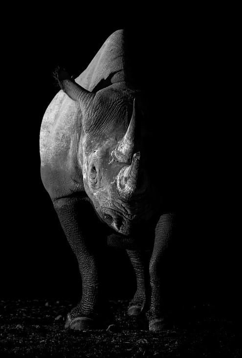 Black rhino.jpg