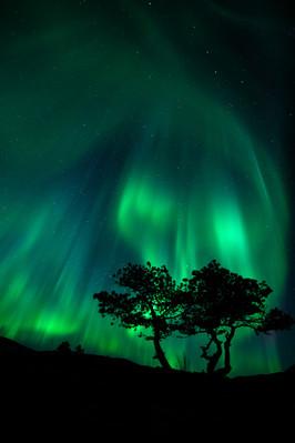Pinetree auroras.jpg