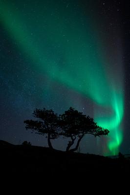 Pinetree auroras II.jpg