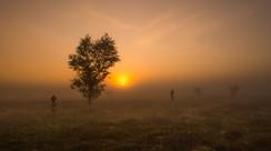 Summer mist.jpg