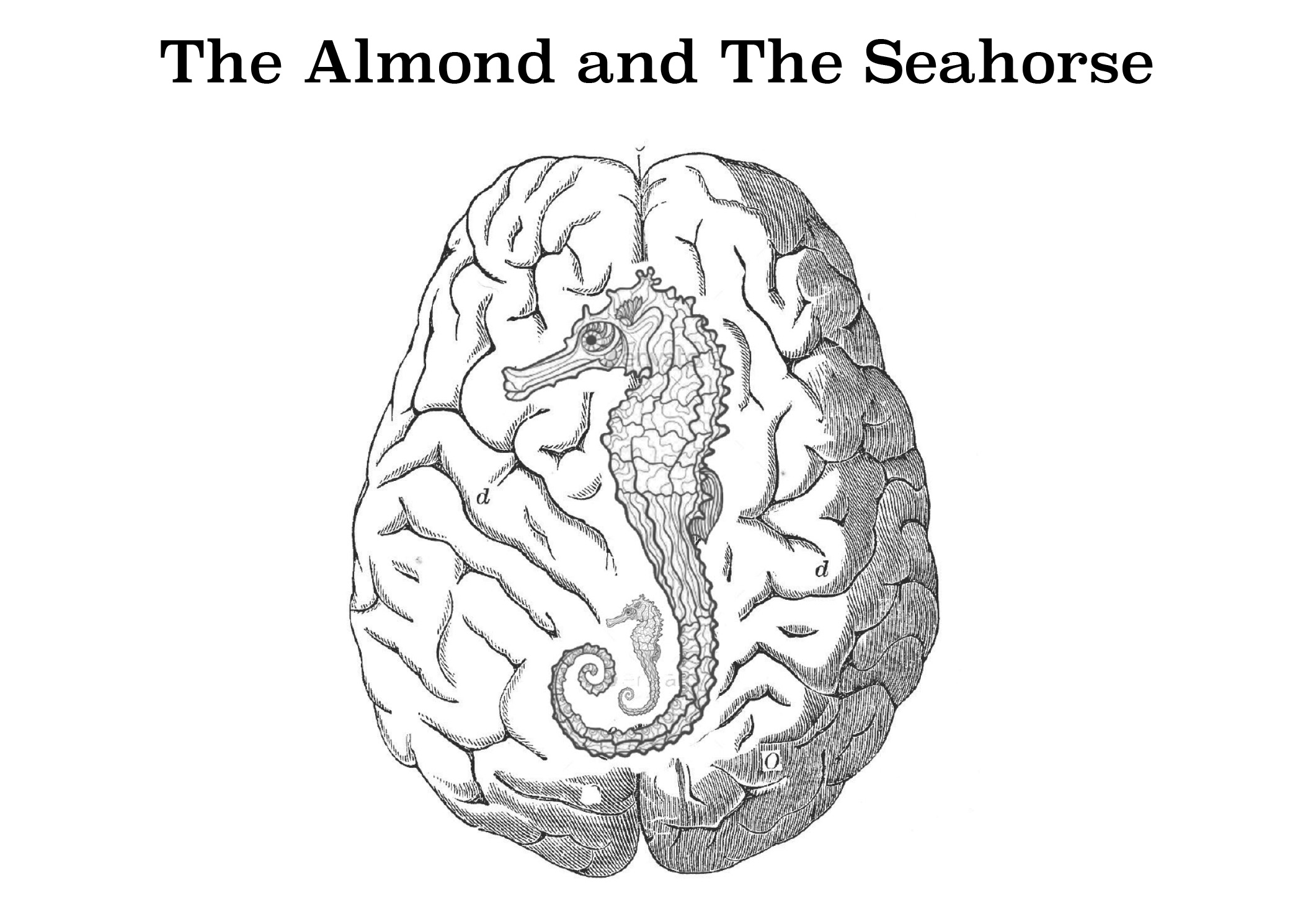 The Almond And The Seahorse