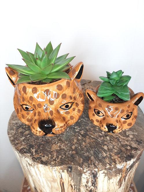 Succulente animaux