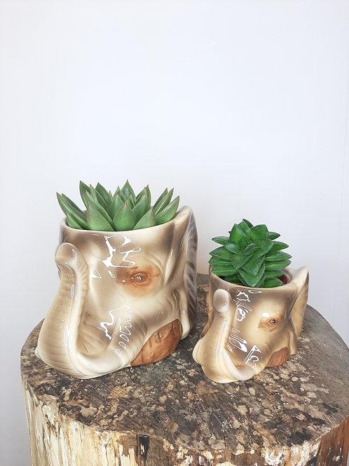 Succulente pot élephant