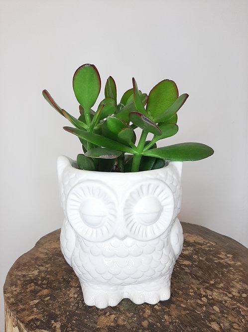Copie de Succulente et son pot Hiboux