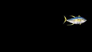 paia-fish-market-logo.png