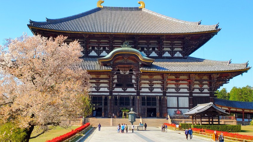 1-Day Kyoto & Nara Bus Tour (Round trip from Kyoto/with Lunch)