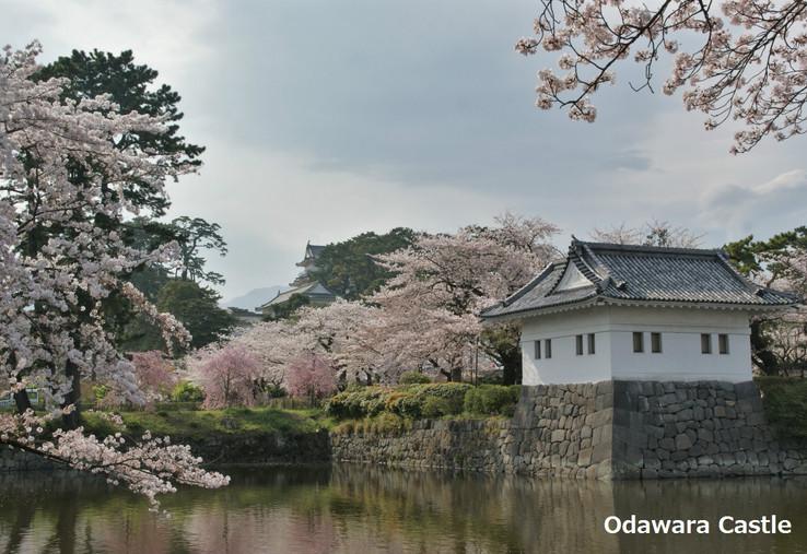 3. Odawara Castle.jpg