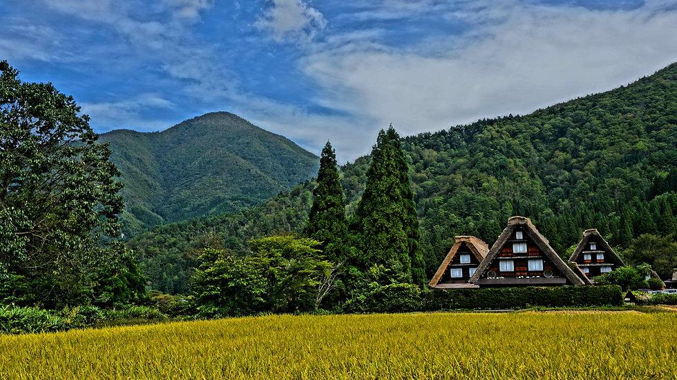 [Curated, Deluxe Plan] 11 Days Tokyo, Hakone, Kyoto, Kanazawa and Shirakawago