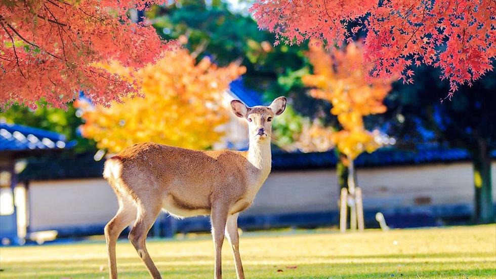 Nara + Uji, Full Day