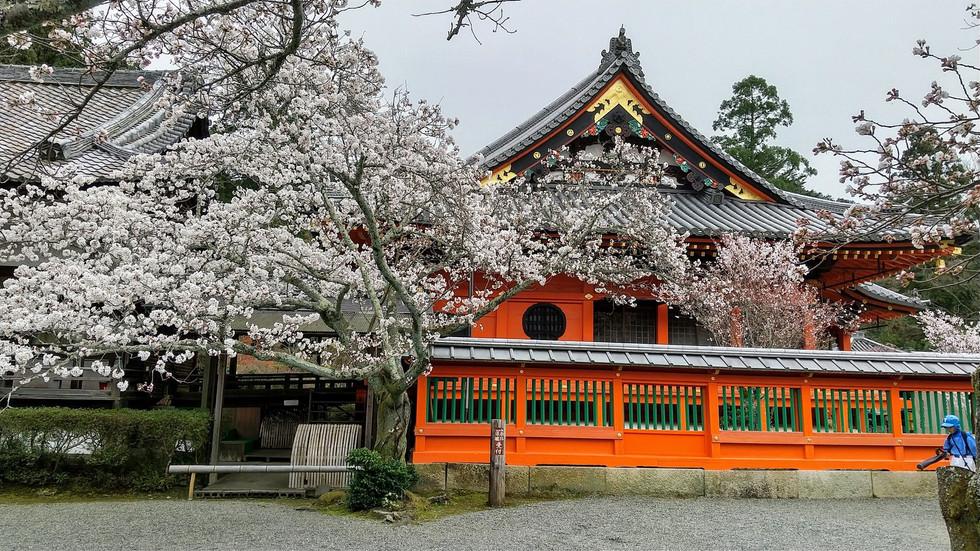 Bishamondo, Kyoto, Miyabi Kyoto Kanko Taxi(1)