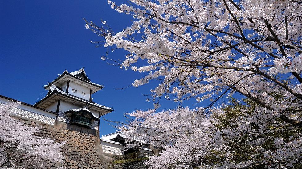 Kanazawa Full Day Private Guided Tour