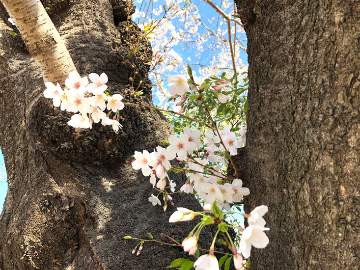 Tokyo, Soichi Tatsuzato, Certified English Speaking Guide