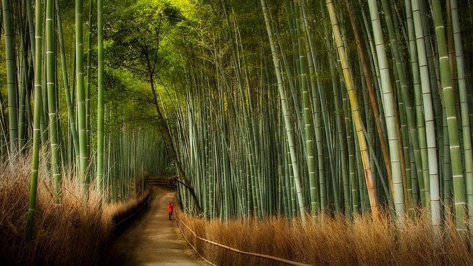Sagano Bamboo Arashiyama Tour