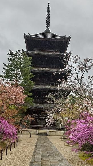Ninnaji, Kyoto, Miyabi Kyoto Kanko Taxi