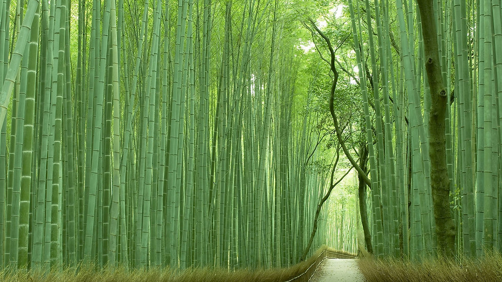 [Virtual Tour] Kyoto Arashiyama & Sagano Tour led by Local Expert