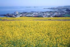 republic-of-korea-5131925_1920.jpg