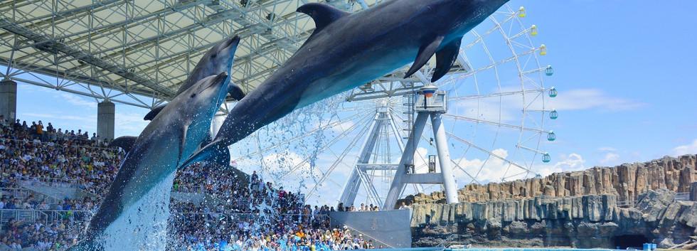 7.Port of Nagoya Public Aquarium.jpg