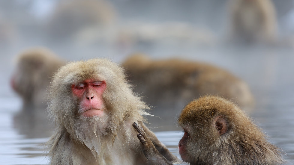 1-DAY Snow Monkey Tour (Round-trip from NAGANO)