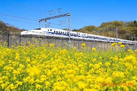 11. FLEX-MISHIMA.jpg