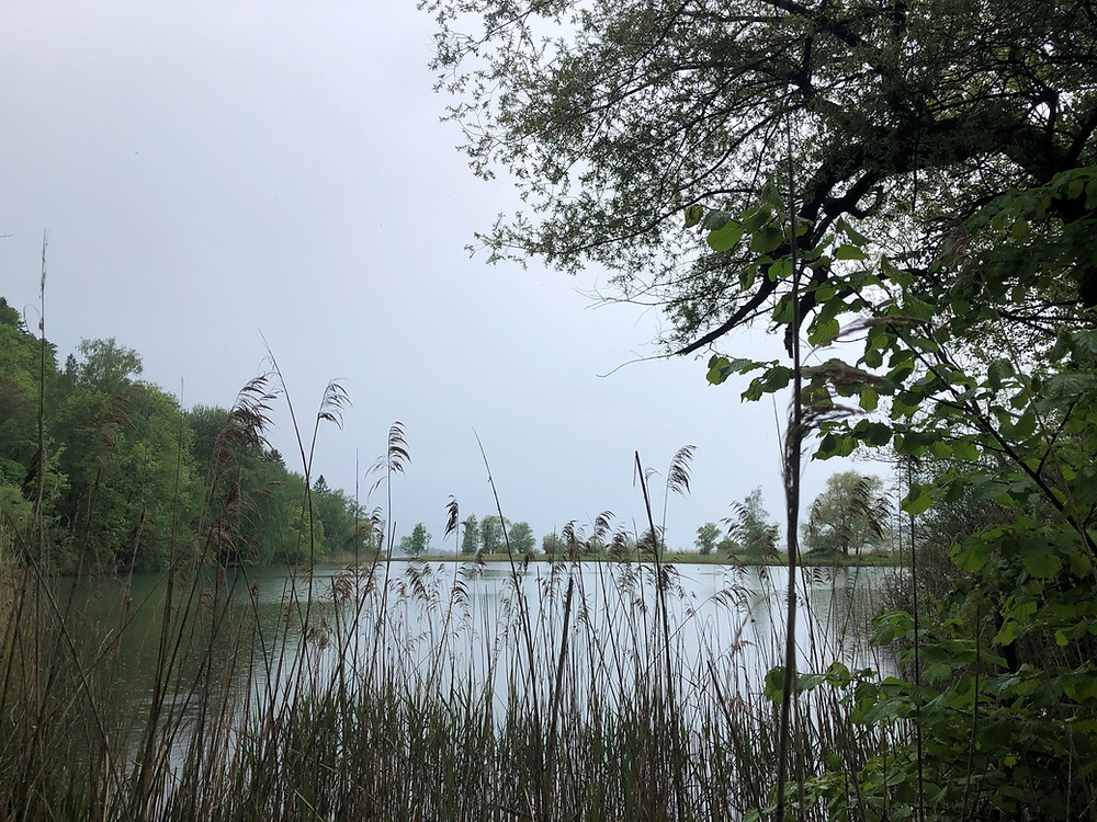 Ein Nebenarm der Linth mündet in Form verschiedener Becken in den Zürichsee