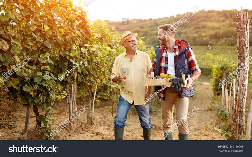 stock-photo-family-in-vineyard-celebrati