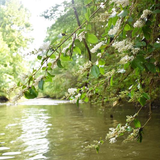 Creek wedding scenery