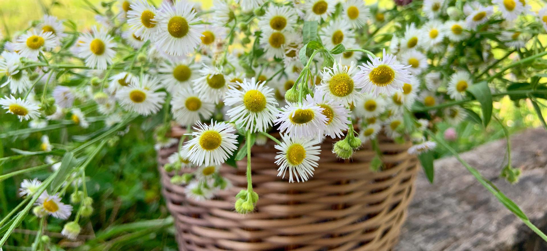 Basket of wildflowers
