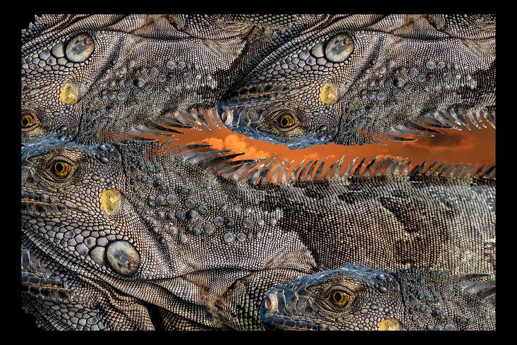 Iguana#1lowres.jpg