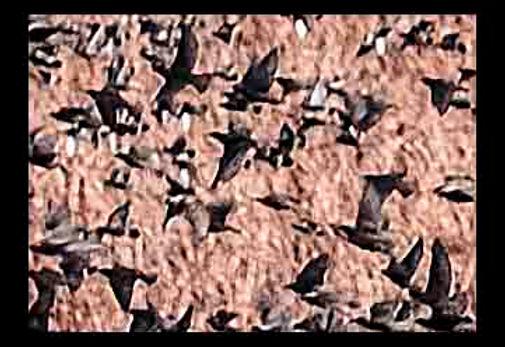 Birds#4reduxlowres.jpg