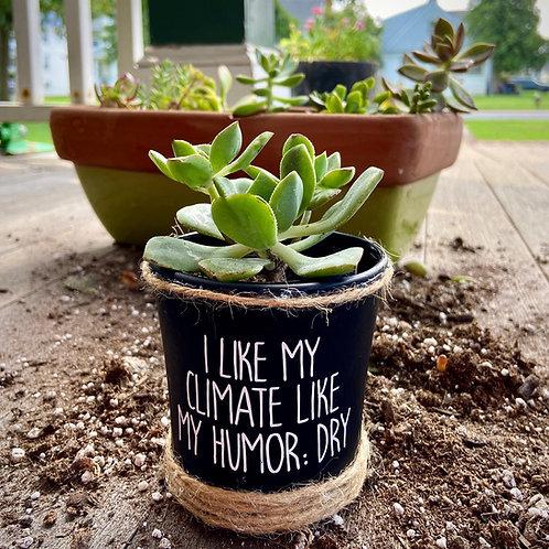 Dry Humor Succulent Pot