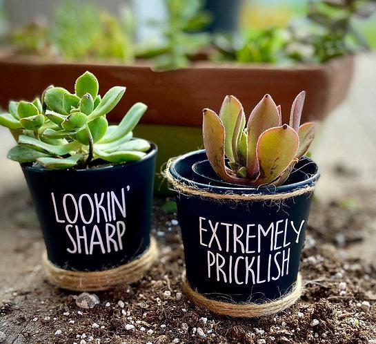 Extremely Pricklish Succulent Planter