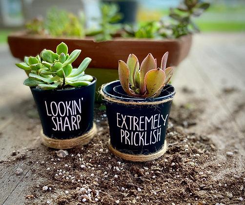 Succulent Pots (2) - Prickly Pack