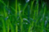 meadow-4195369_1920.jpg