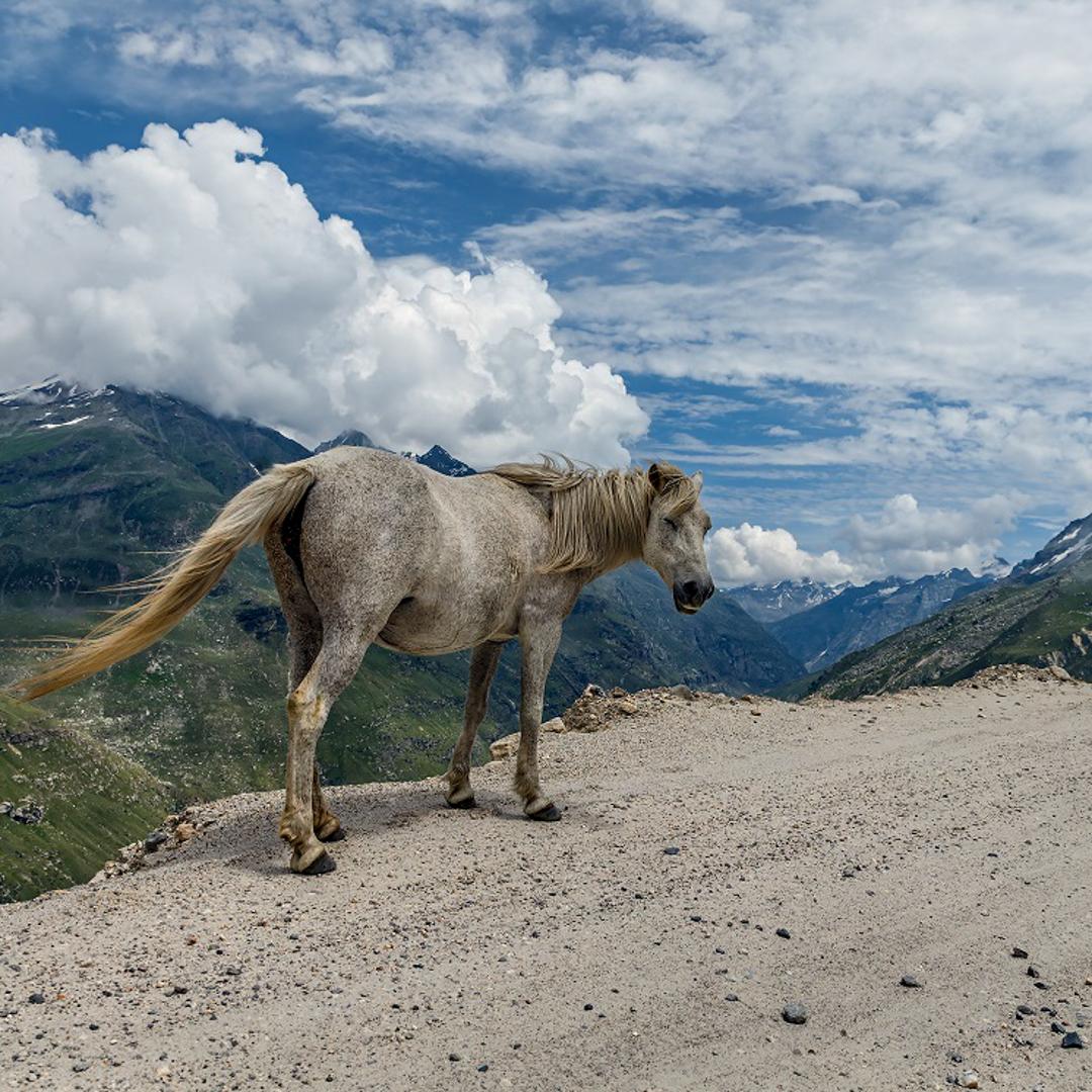 Manali-Spiti-Valley-Himachal-Pradesh