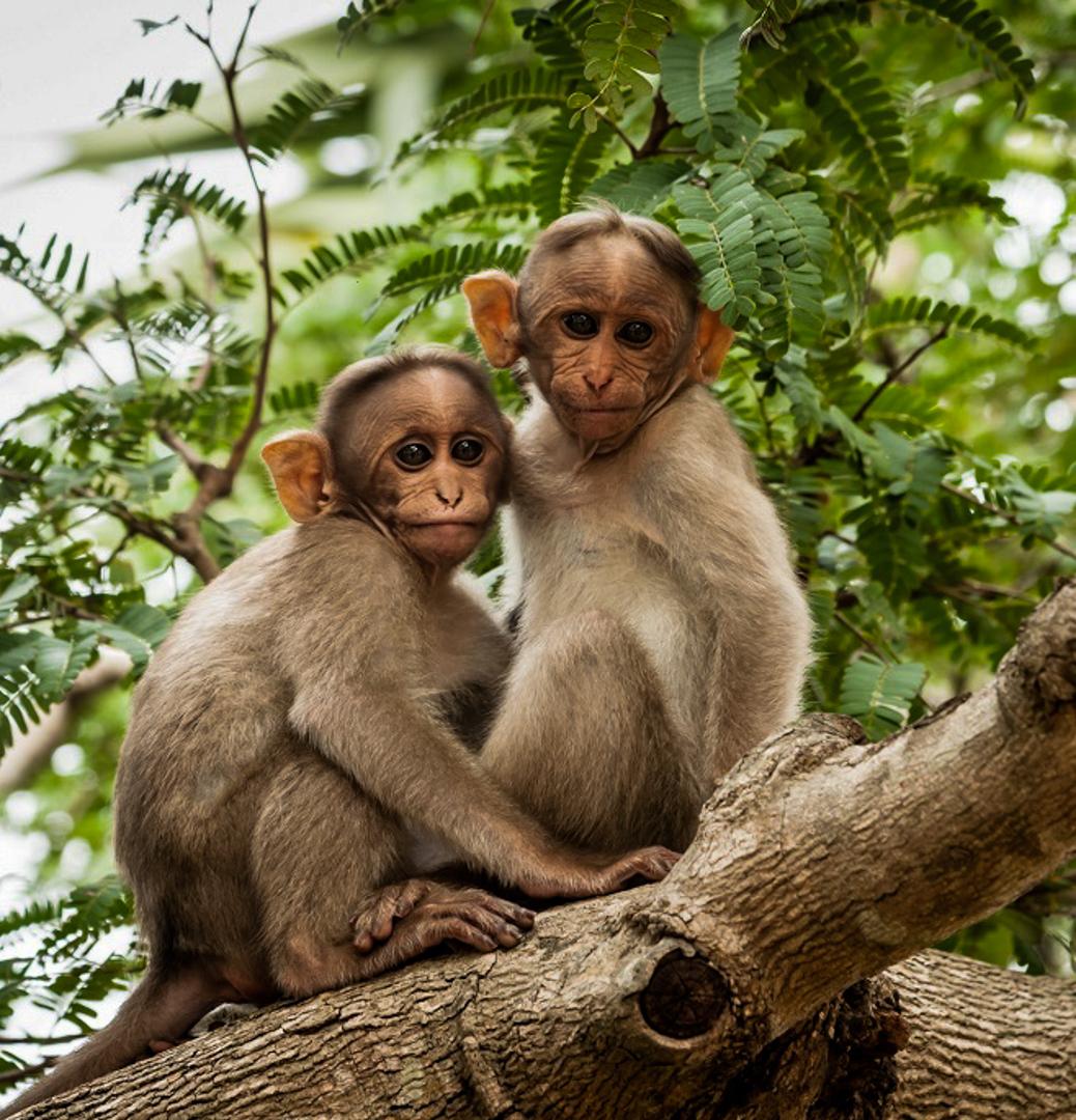 Bandipur National Park - Monkeys