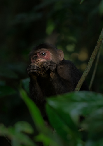 Photo Tour Assam Gibbon Sanctuary