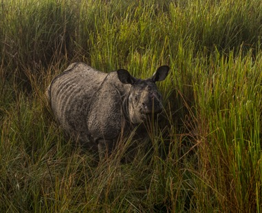 Photography Tour Kaziranga Reserve