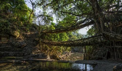 Photo Tour Living Root Bridge