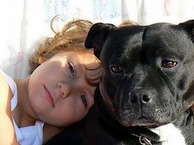 Dog Breeds That Pose the Highest Risk of Hurting Children